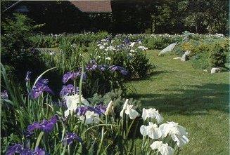 Ensata Gardens